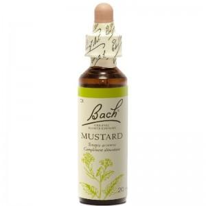 Dr Bach Ανθοϊαμα Mustard 20 ml